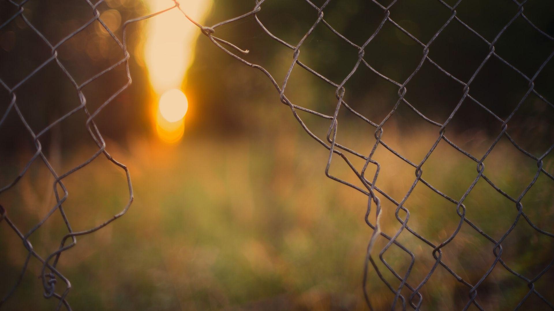 Порванная сетка сулит свободу